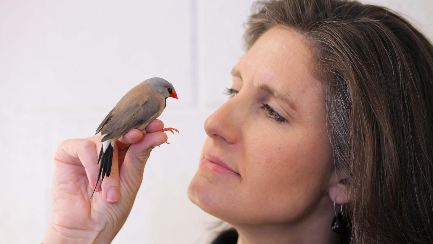 Sarah Woolley, PhD holding a songbird